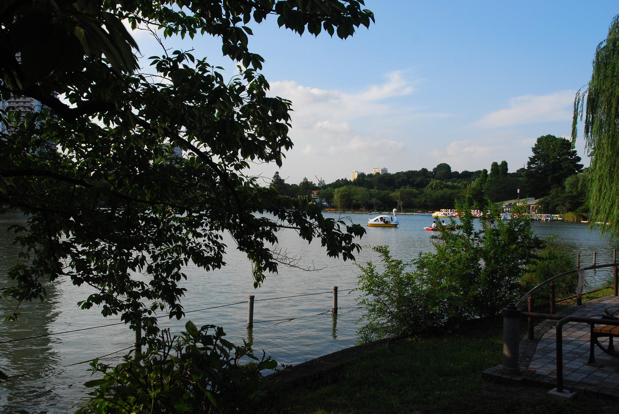 Barcas en el lago del Parque Ueno