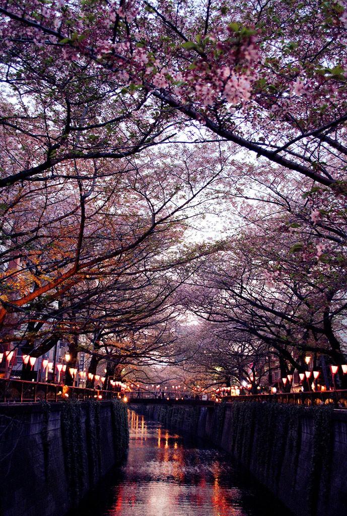 目黑川夜桜. De 家家