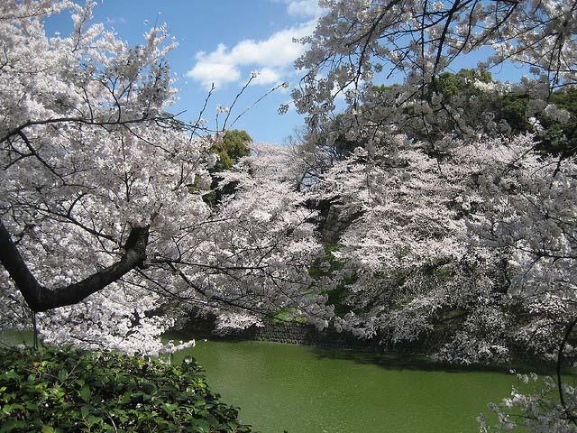 Chidorigafuchi. Foto de Lixian