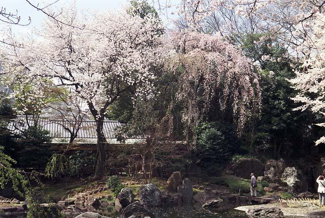 Chidorigafuchi. Foto de Shuzo Serikawa