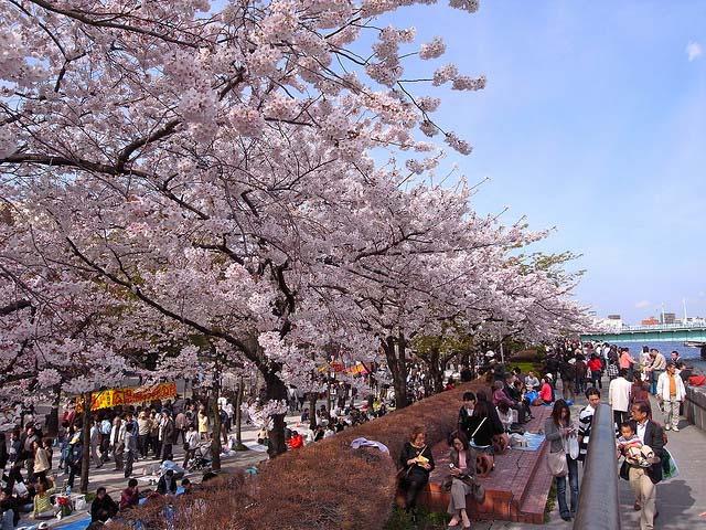 Parque Sumida. Foto de Yoshikazu Takada