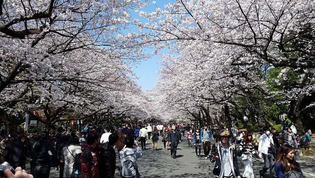 Parque Ueno. Foto De DozoDomo