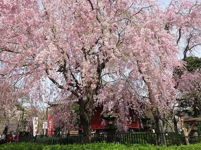 Parque Ueno. Foto de Victor Lee