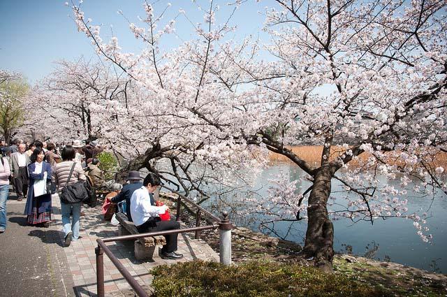 Parque Ueno. Foto de Wunkai