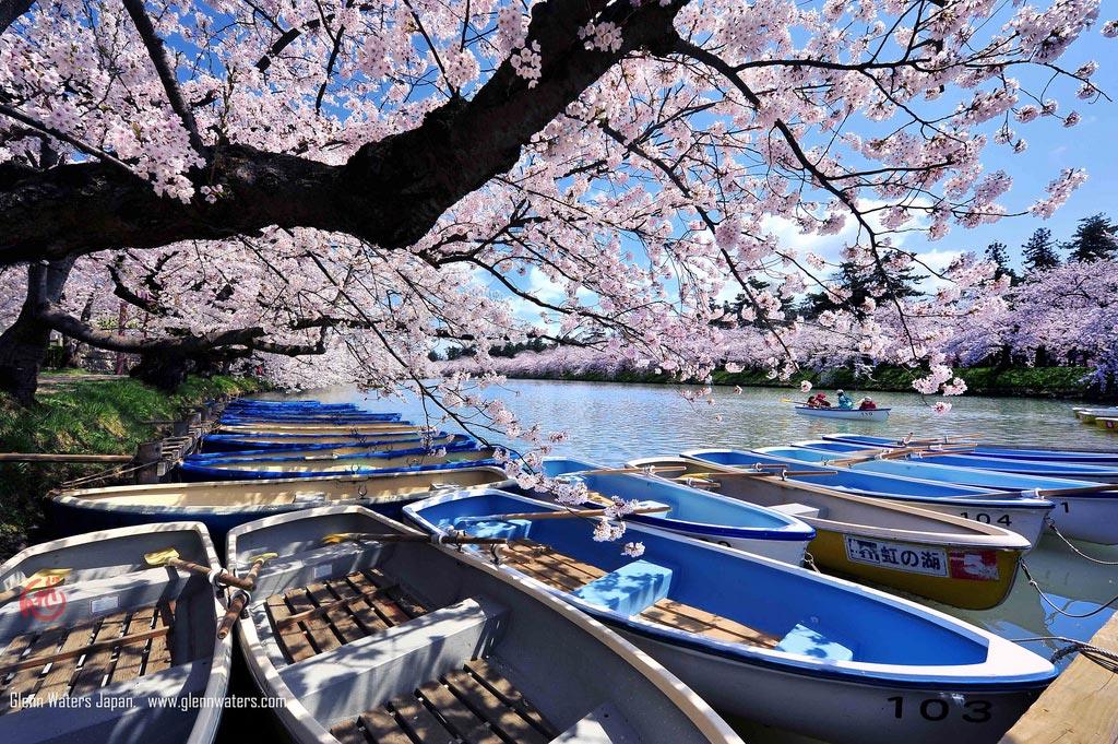 Sakura Boats. De Glenn Waters