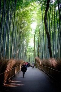 Stroll in Bamboo Groves. De Mahalarp Teeradechyothin