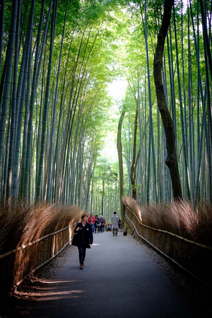 Stroll in Bamboo Groves. De Mahalarp Teeradechyothin