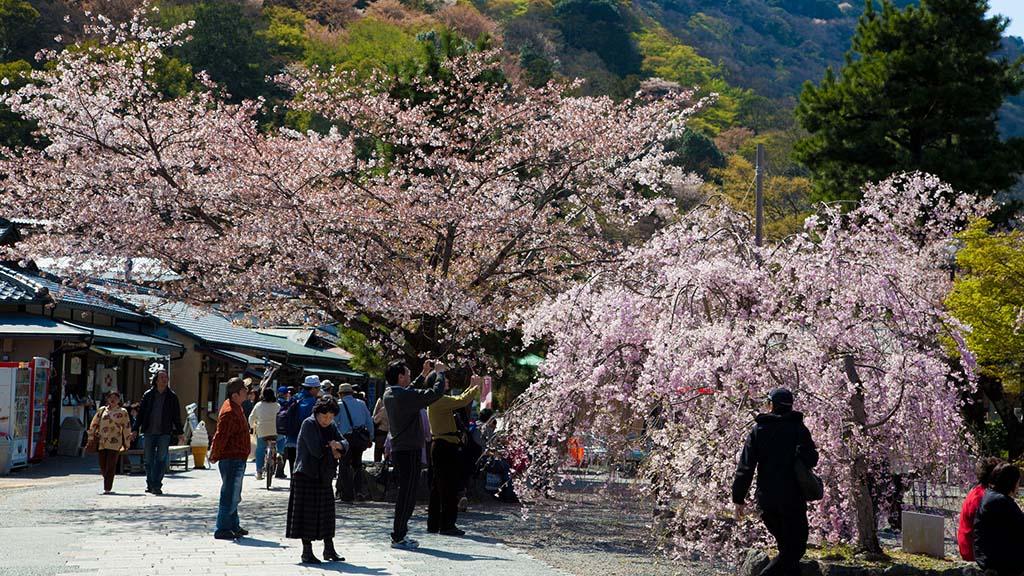 Arashiyama. Foto de camknows