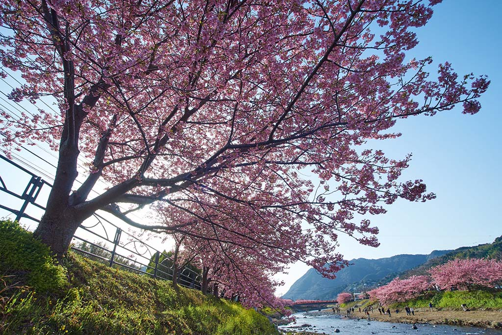 Kawazu River. Foto de peaceful-jp-scenery