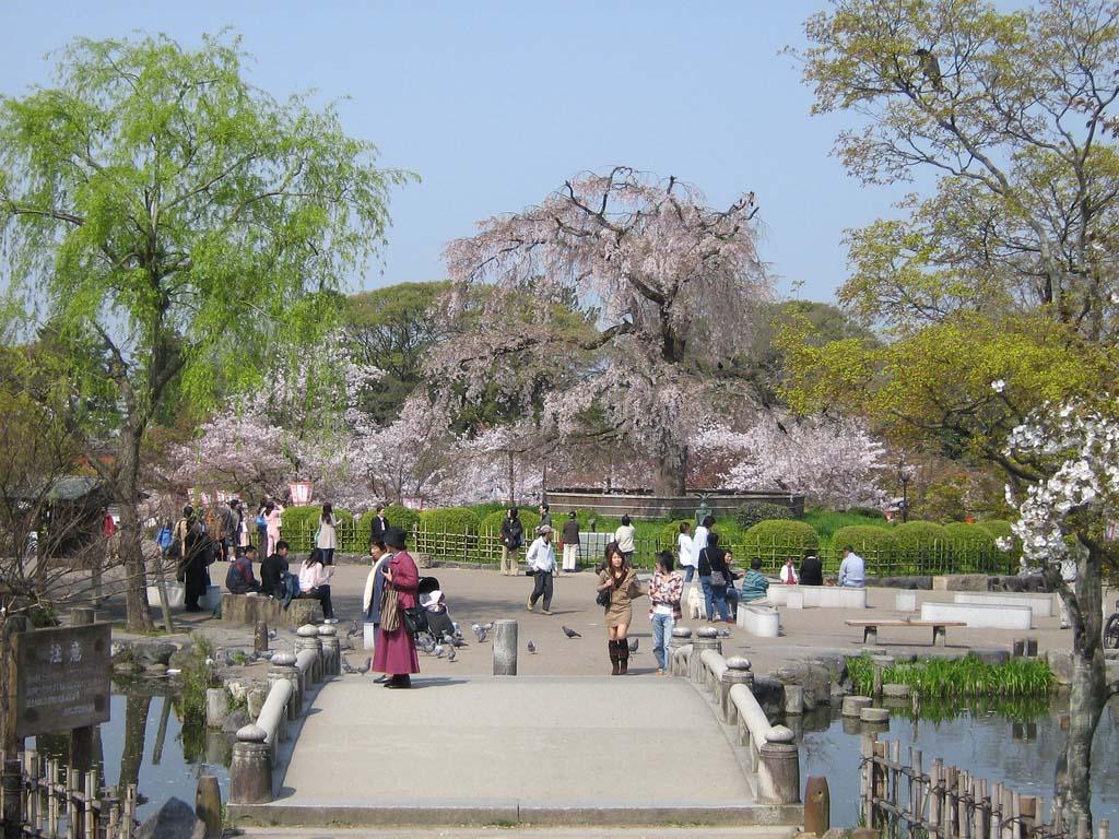 Parque Maruyama. Foto de Gavin Anderson