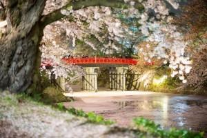 Sakura en el parque Hirosaki. Foto de GenJapan1986