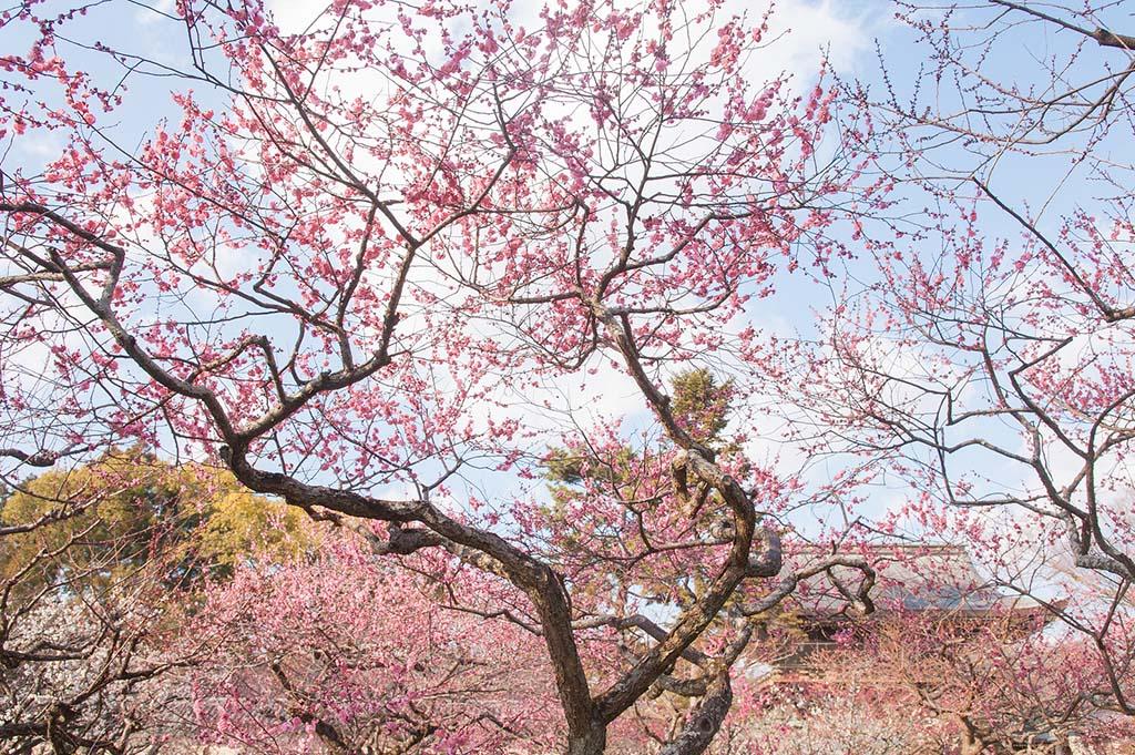 Sakura. Foto de HanWen Chen