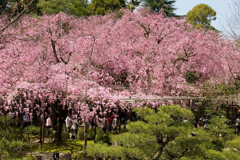 Santuario Heian. Foto de Kimon Berlin