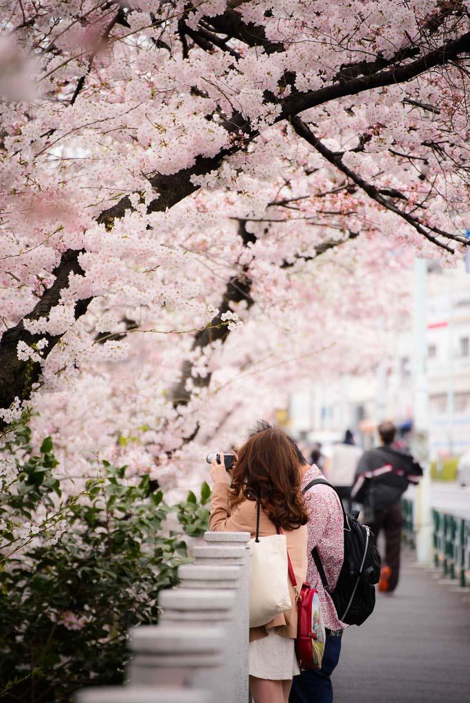 Sakura Photographer. Foto de Yanai Takahiro