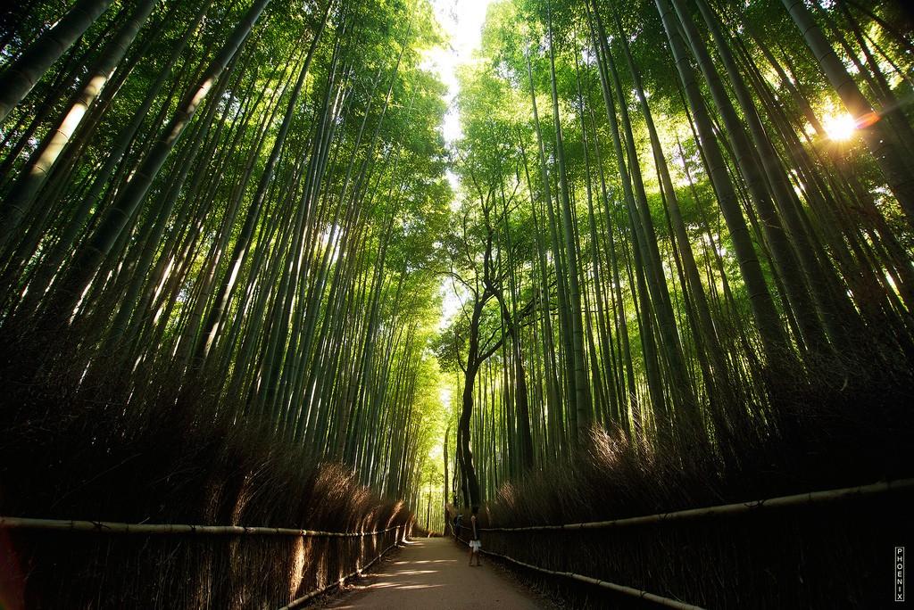 Bamboo Forest. Foto de Nguyen Hoang Viet