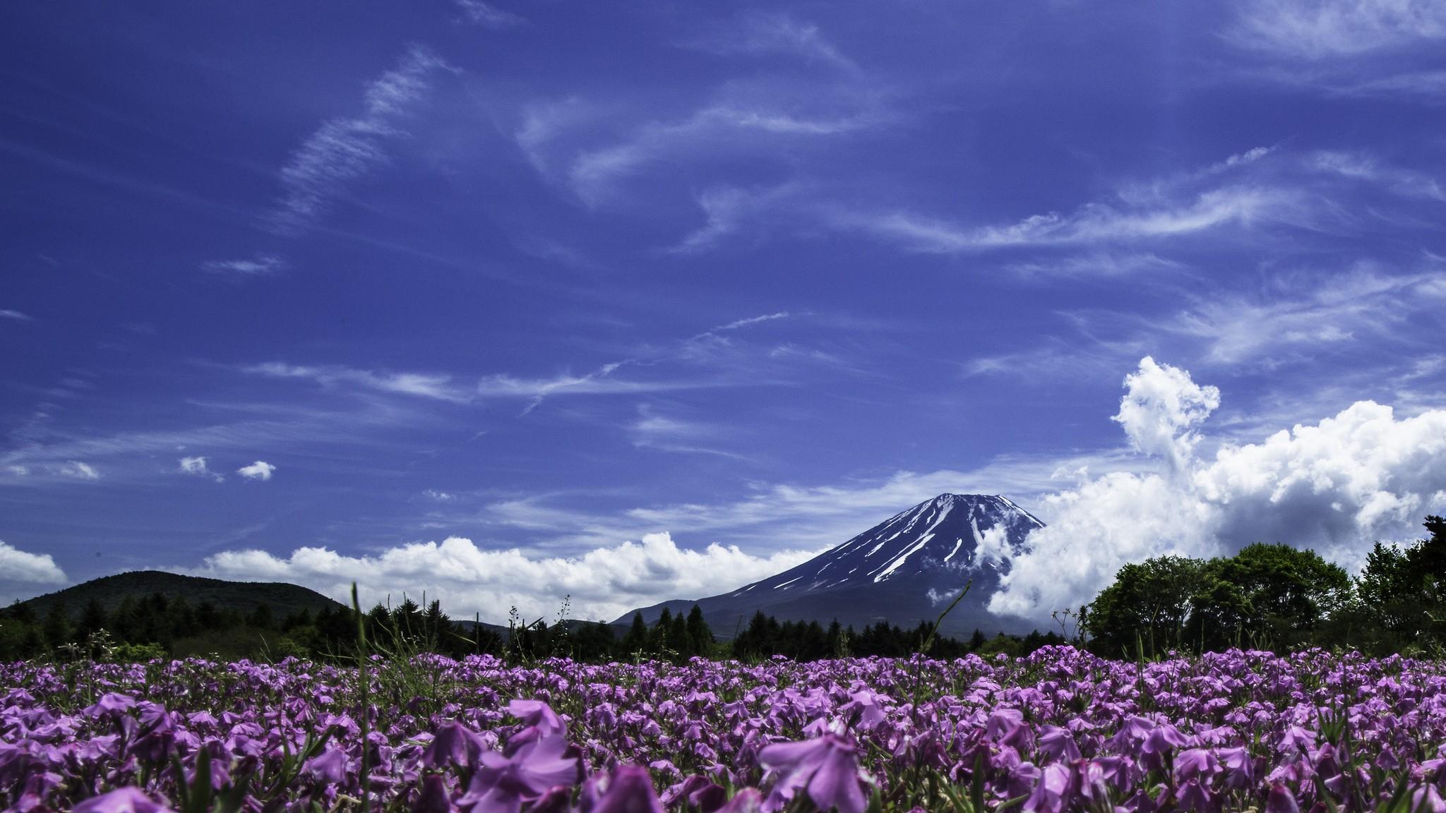 Fuji Shibazakura Matsuri. Foto de Kumiko Nakashima