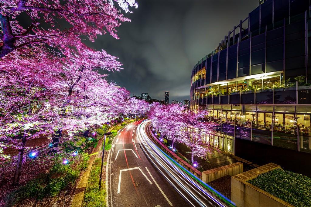 Sakura Lightup at Roppongi Hills. Foto de shejian