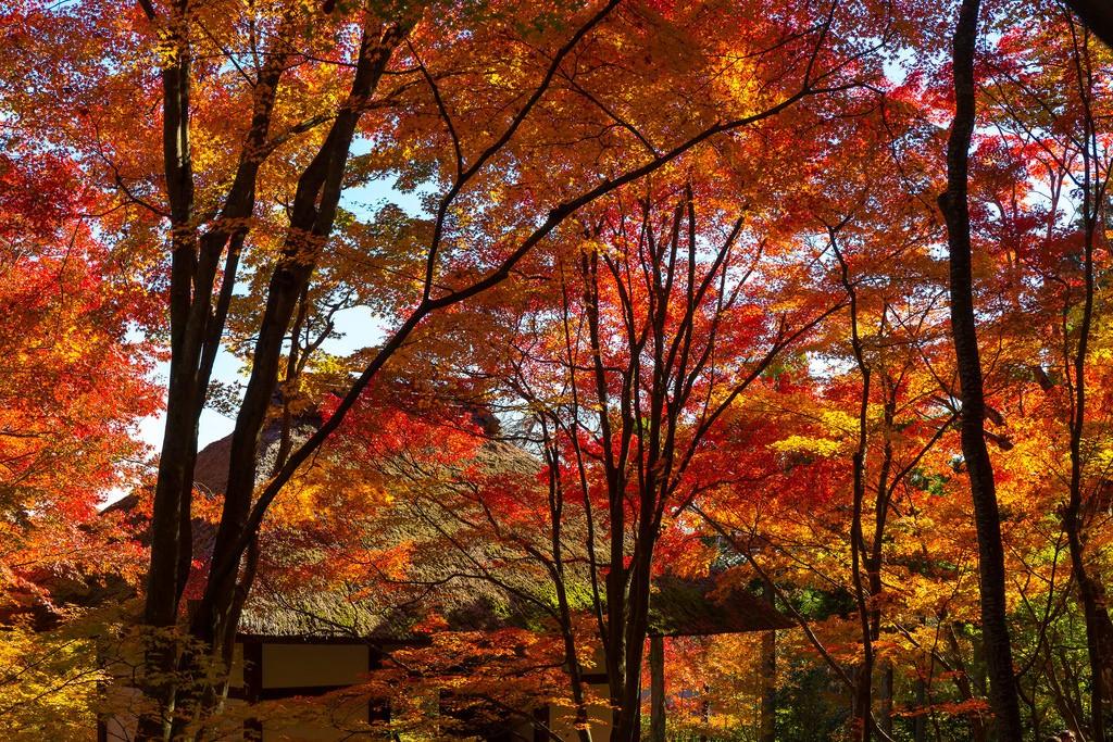 Jyoujyakkou-ji. Foto de Yuya Horikawa