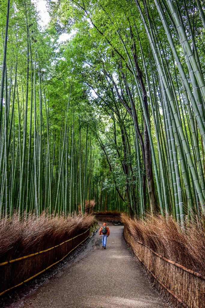 Kyoto in the rain. Foto de Paul Richard Mayer