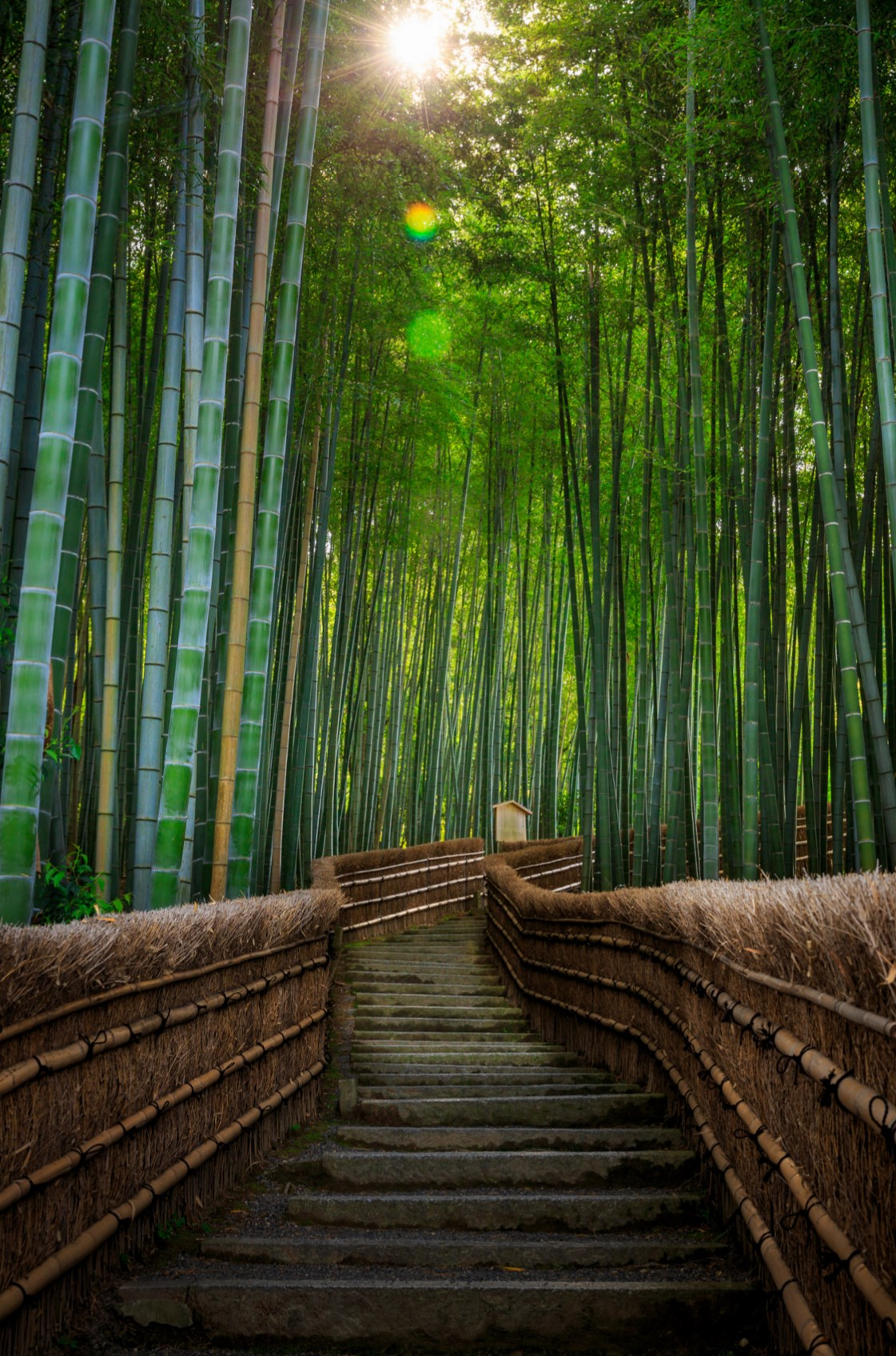 Arashiyama bamboos. Foto de Pierre Pichot