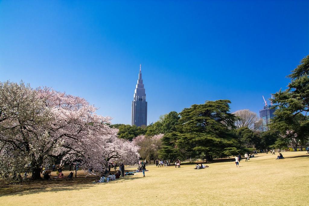 Sakura en el parque Shinjuku Gyoen