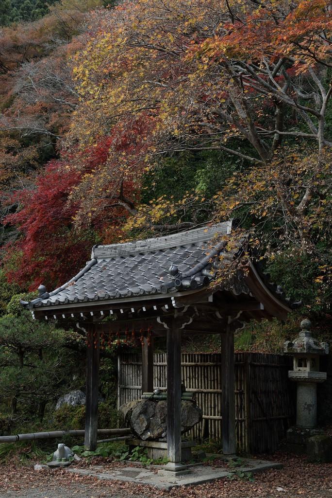 晩秋、夕暮れの刻. Foto de nobu_photo