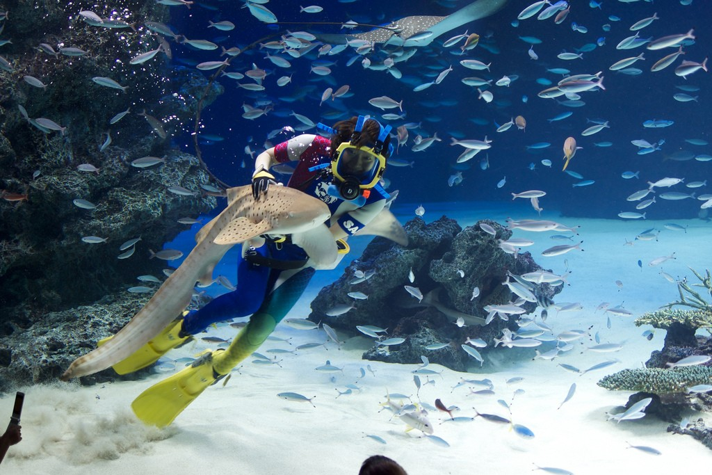 Sunshine Aquarium. Foto de Zengame