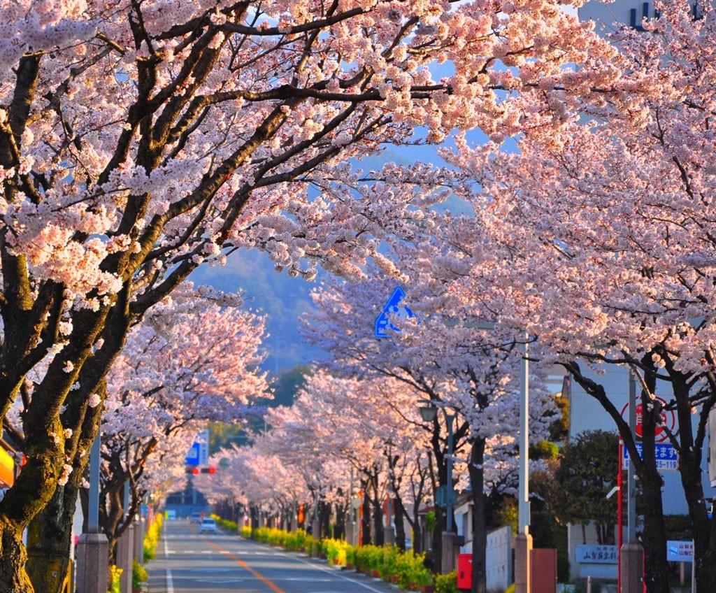 Thinking of Spring!. Foto de philip.graham