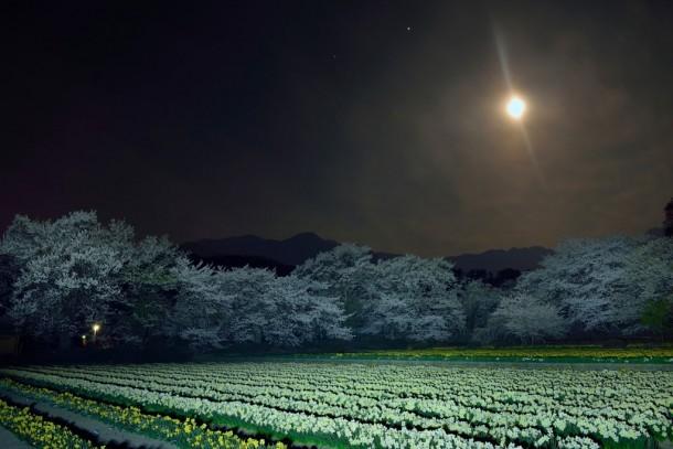 月夜の共演. Foto de syuki.eita