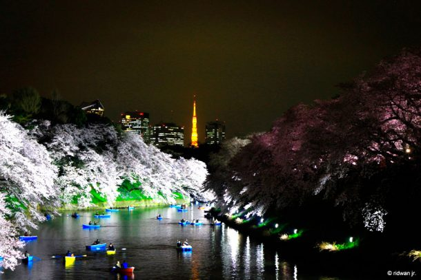 Hanami in the night. Foto de ridwan.jr.