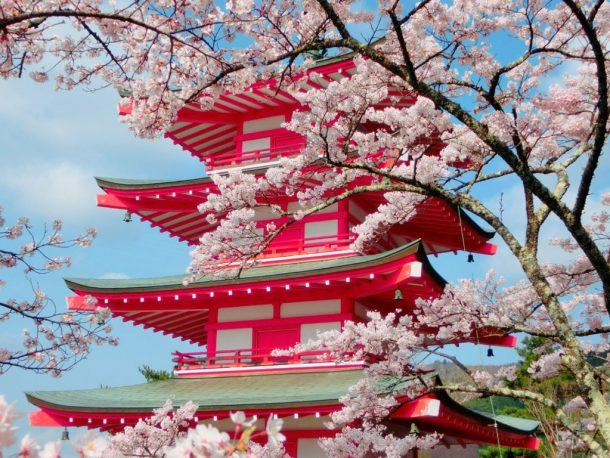 桜と忠霊塔. Foto de Serendipity May