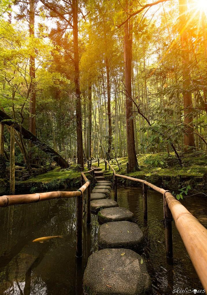 A walk in the trees, Sakyo, Japan. Foto de skulicious