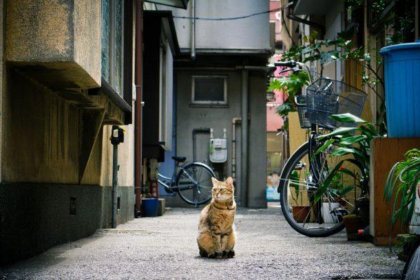 Foto de Masao