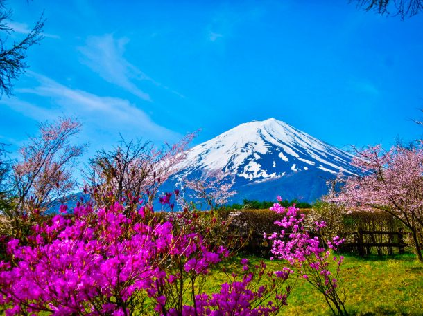Pink flowers and Mount Fuji. Foto de Kazuhira Ito