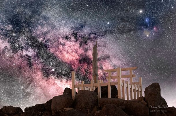 Spring star. Foto de Taisei Uchida