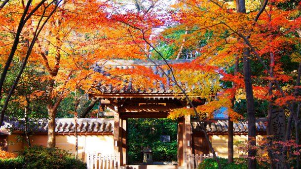 Foto de setagayatoieba