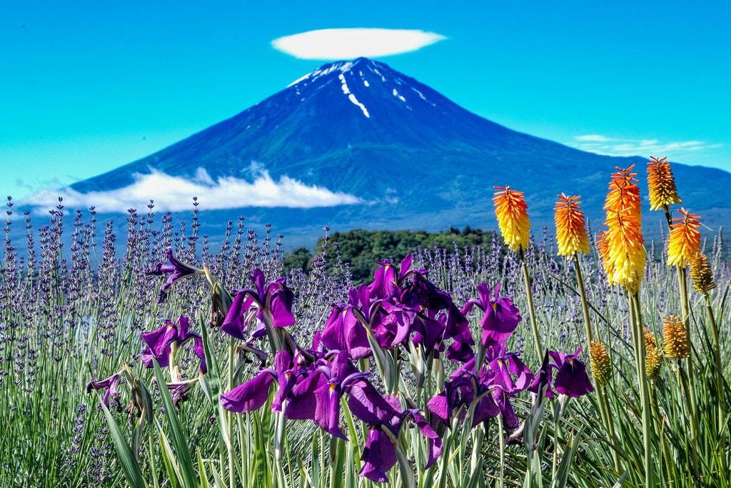Fuji and flowes. Foto de Shinichiro Saka