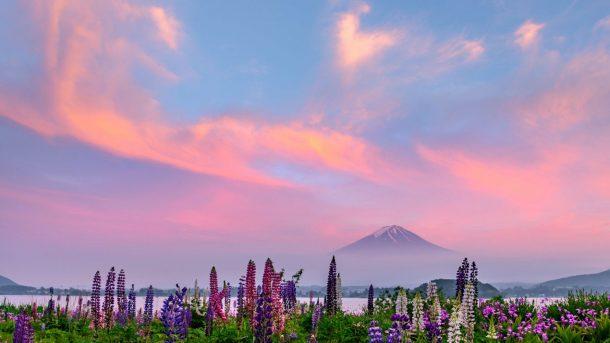 Sunset glow and lupine. Foto de takashi-legendfuji